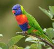 15 Penyakit Pada Burung Nuri yang Harus Diketahui