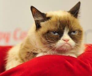 10 Cara Mengatasi Kucing Suka Menggigit Bagi Pemula Arenahewan Com