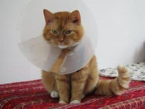 13 Ciri Ciri Kucing Trauma Dan Cara Mengatasinya Arenahewan Com