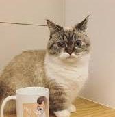 13 Vitamin Bulu Kucing Agar Bagus Arenahewan Com