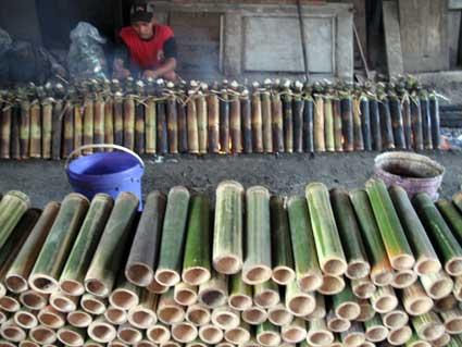 10 Cara Ternak Kroto dengan Media Bambu
