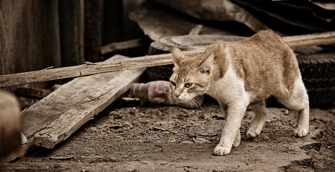 10 Cara Membuat Kucing Liar Menjadi Kucing Rumahan