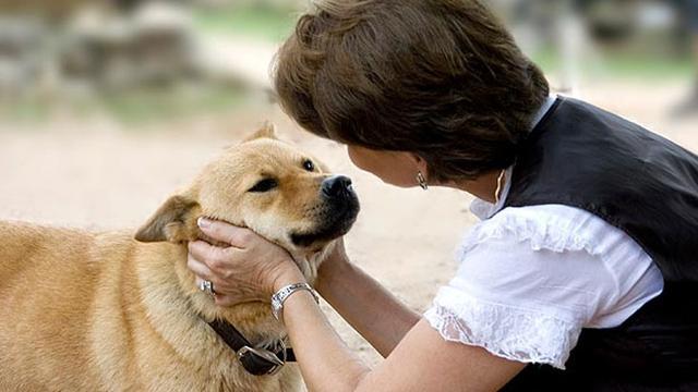 15 Cara Menggemukan Anjing Kampung