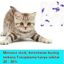 13 Ciri Ciri Kucing Yang Terkena Penyakit Toxoplasma