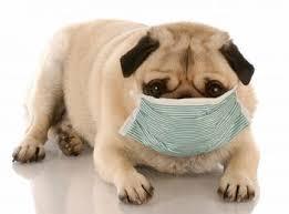 12 Cara Menghilangkan Bau Mulut pada Anjing