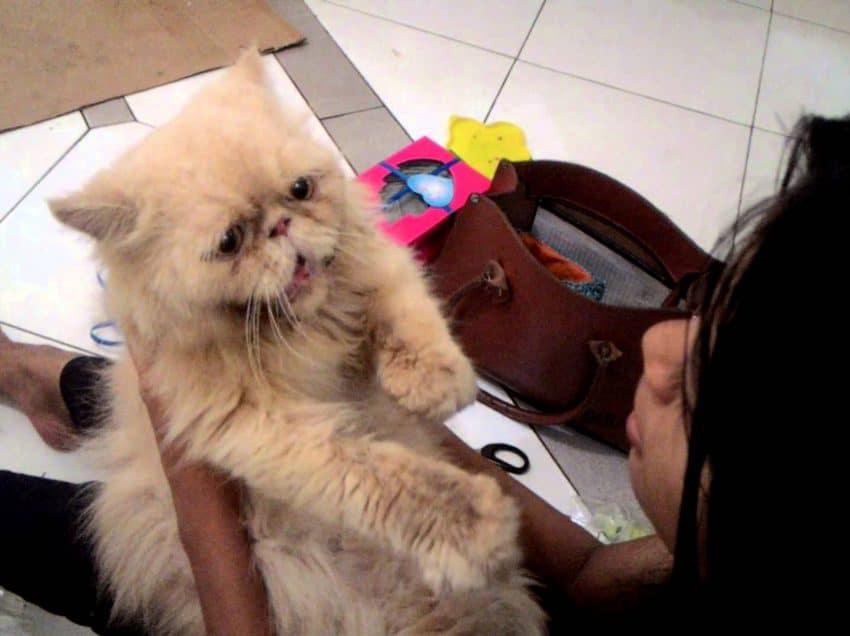 9 Cara Kucing Mengenali Majikannya