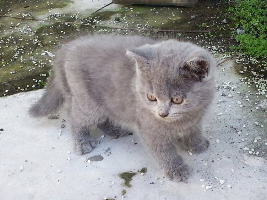 8 Cara untuk Mengetahui Umur Kucing