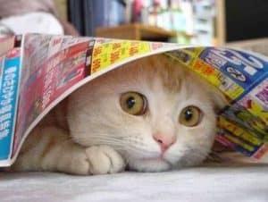 8 Cara Mengatasi Kucing Yang Ketakutan Arenahewan Com