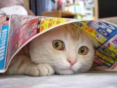8 Cara Mengatasi Kucing yang Ketakutan