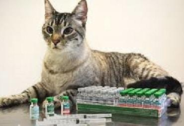 6 Jenis Vaksin pada Kucing