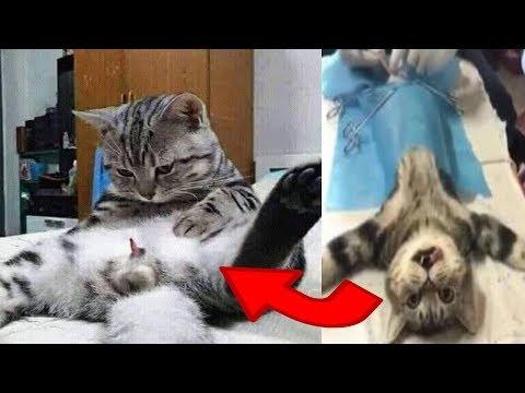 10 Fungsi Steril pada Kucing Jantan