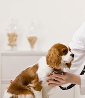 7 Jenis Vaksin pada Anjing