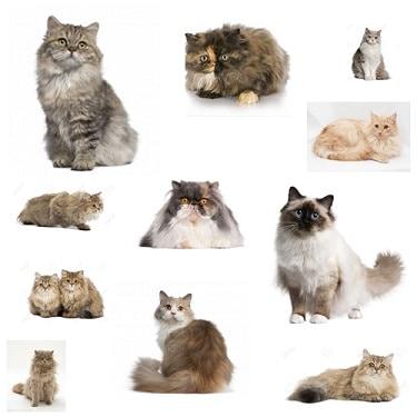 10 Fungsi Bulu pada Kucing
