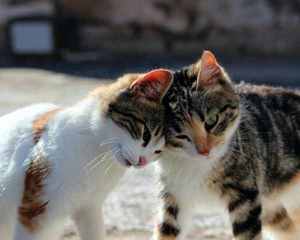 15 Cara Mengatasi Gatal Pada Kucing