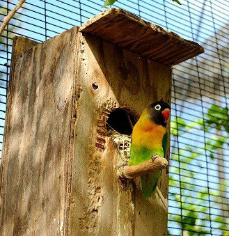 12 Cara Membuat Sarang Burung Lovebird
