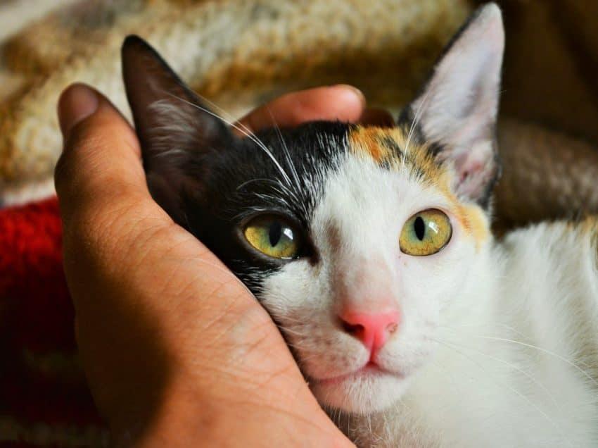 8 Cara Menghilangkan Belatung Pada Kucing