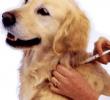 8 Cara Pengobatan untuk Anjing Alergi