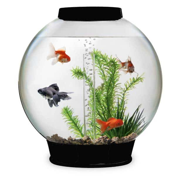12 Tips Memelihara Ikan di Akuarium Mini