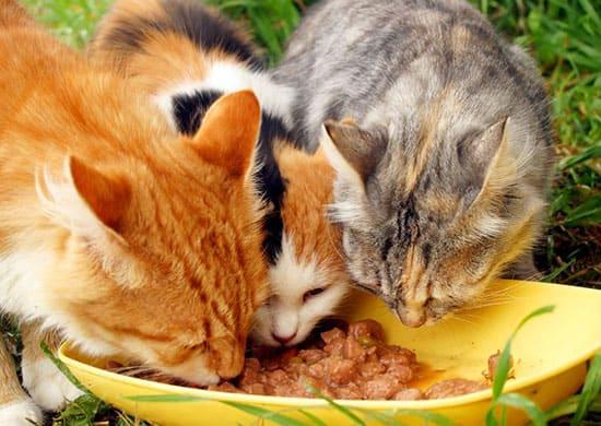 Manfaat Vitamin E Untuk Kucing Agar Lebih Sehat