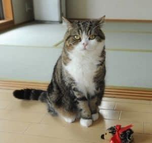 11 Cara Merawat Kucing Lokal Agar Bagus Arenahewan Com
