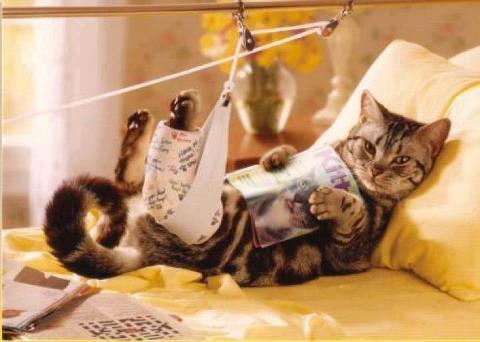 12 Cara Mengobati Kucing Pincang