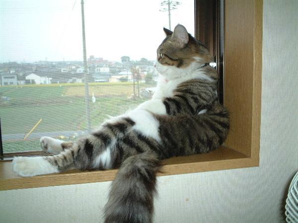 12 Cara Merawat Kucing Agar Tidak Kabur