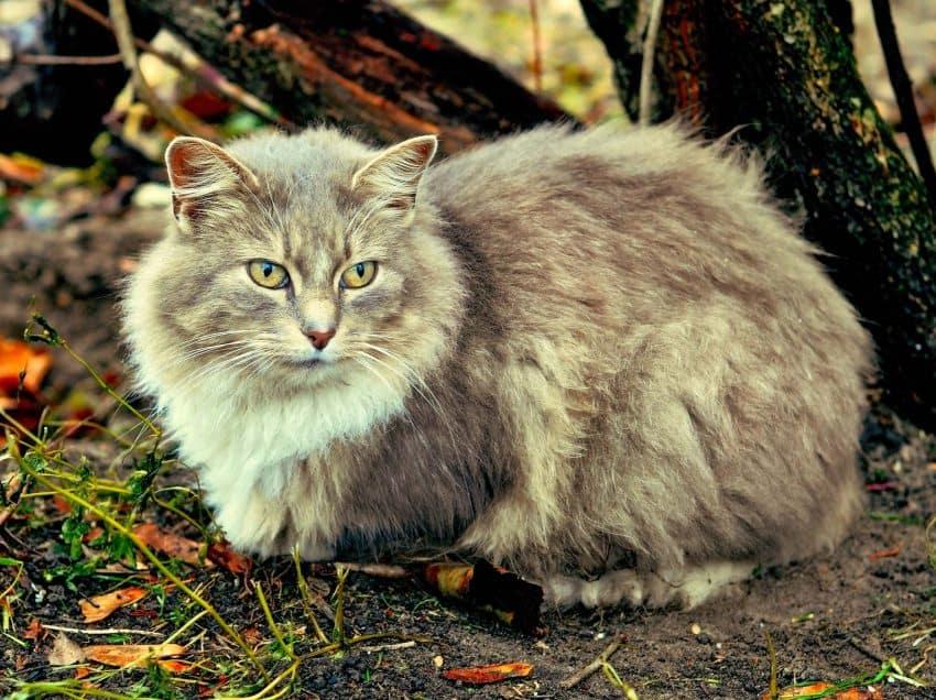 Vitamin untuk Bulu Kucing Yang Baik Untuk Perawatan Kucing