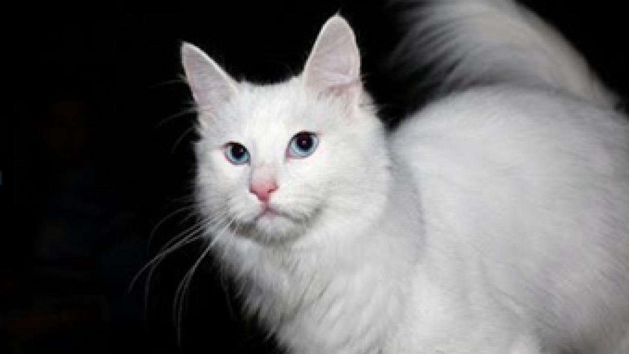 17 Manfaat Vaksin Kucing Untuk Kesehatannya Arenahewan Com
