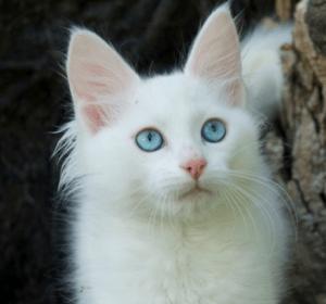 Unduh 65+  Gambar Kucing Hamil Muda Terbaru Gratis
