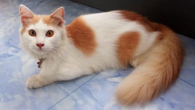 15 Cara Menggemukkan Kucing Secara Alami dan Efektif