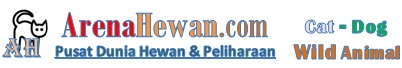 Arena Hewan