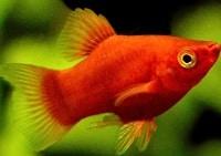 12 Cara Merawat Ikan Hias Dalam Toples Arenahewancom