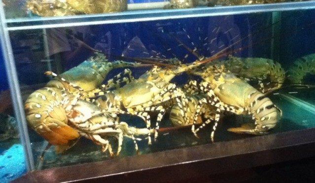 17 Cara Budidaya Udang Air Tawar Di Aquarium
