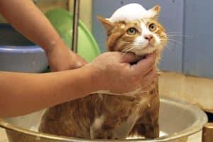 kucing,hairdyer