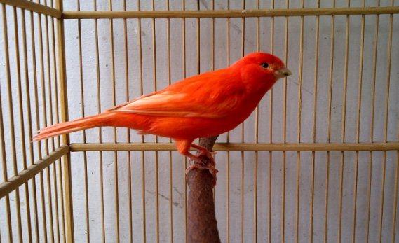15 Cara Merawat Burung Agar Rajin Berkicau