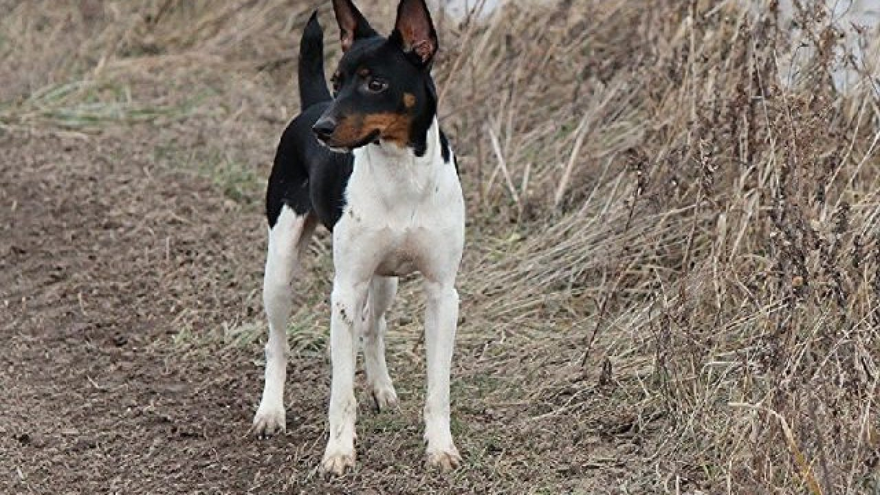 15 Cara Melatih Anjing Pemburu Bagi Pemula Arenahewan Com