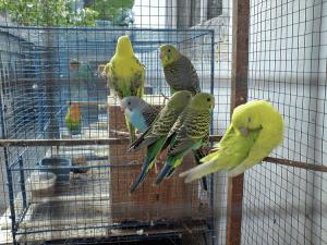 14 Cara Merawat Burung Parkit Di Musim Hujan Dengan Mudah Arenahewan Com