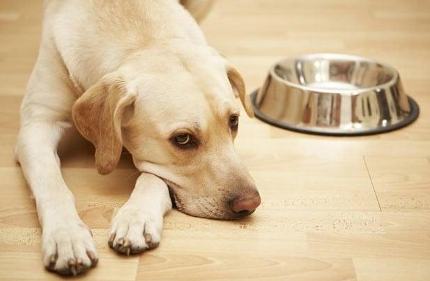 15 Tanda Anjing Depresi – Cara Mengobatinya