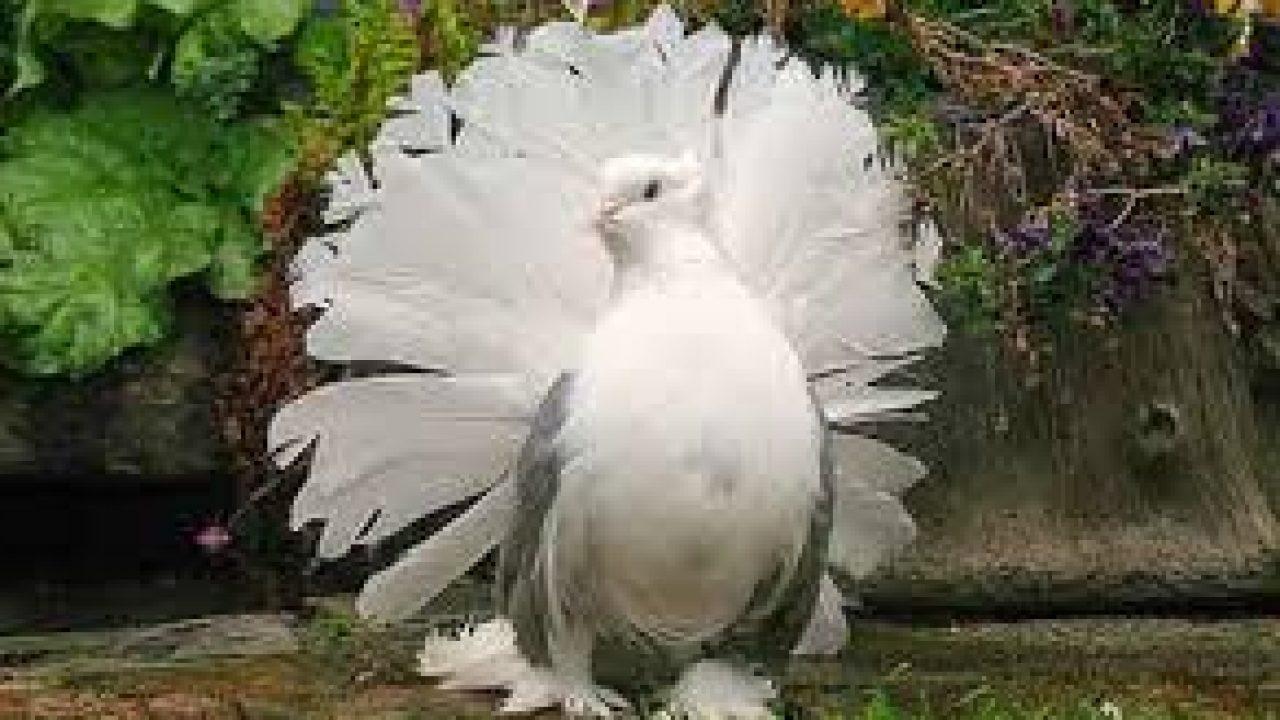 105 Foto Gambar Burung Merak Dari Styrofoam HD  Gratis