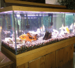 20 Cara Memelihara Ikan Aquarium Agar Tidak Mati