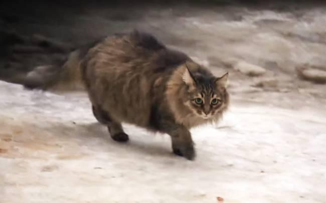 16 Tanda Kucing Betina Tidak Mau Kawin yang Perlu Diketahui