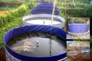 10 Cara Budidaya Ikan Dengan Sistem Bioflok Untuk Pemula Arenahewan Com