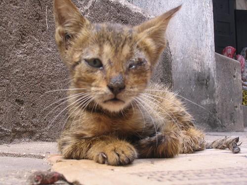 17 Tanda Cacingan Pada Kucing Wajib Tahu Arenahewan Com