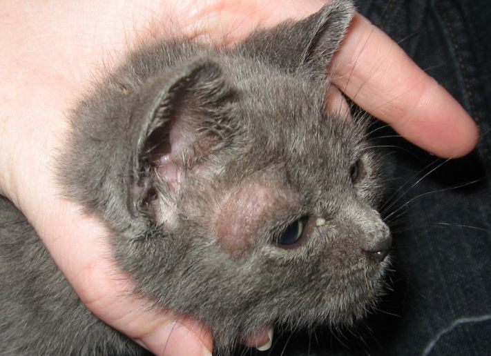 15 Cara Mencegah Jamur Pada Kucing Paling Efektif