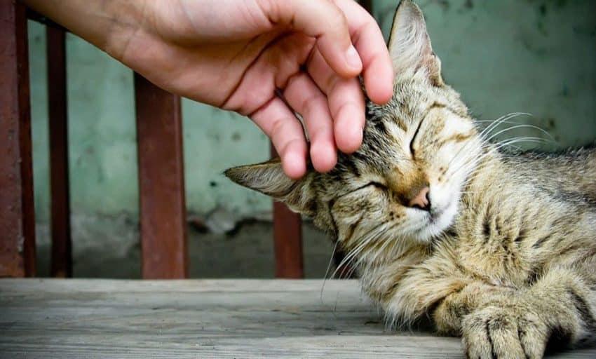 13 Cara Melatih Kucing Bersalaman dengan Mudah