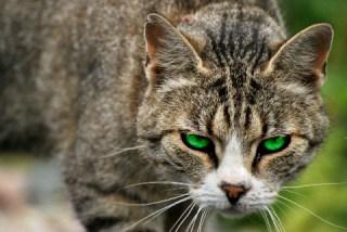 13 Cara Mengatasi Kucing Agresif Paling Tepat dan Perlu Dicoba