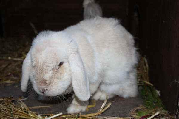8 Pengobatan Ringworm Pada Kelinci yang Efektif Dilakukan