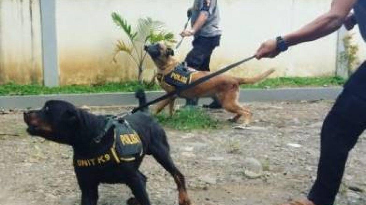 13 Cara Membuat Anjing Agresif Lengkap Dan Ampuh Arenahewan Com
