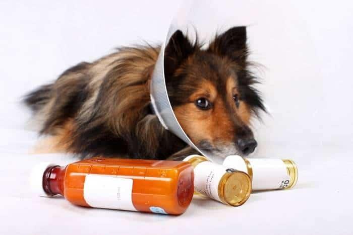13 Cara Merawat Anjing Sakit