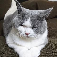 10 Penyebab Bulu Rontok pada Kucing Anggora